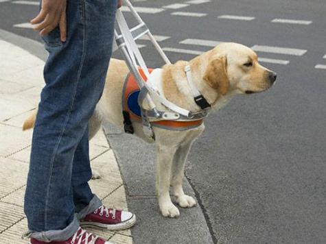 Как правильно вести себя, если вы делите жилое пространство со слепым человеком