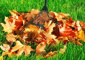 осень современные грабли сгребают яркие опавшие листья в кучу