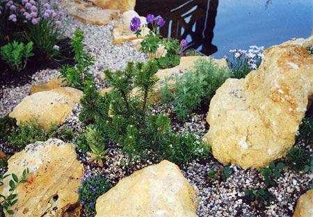 Выращивайте вечнозеленые и многолетние растения
