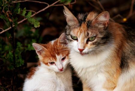 Иначе от вашего напряжения и раздражения животное быстро устанет и перестанет реагировать