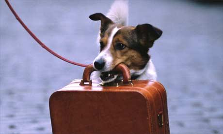 Как взять домашнее животное в отпуск