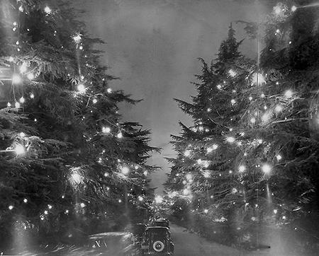 Дорога рождественских деревьев
