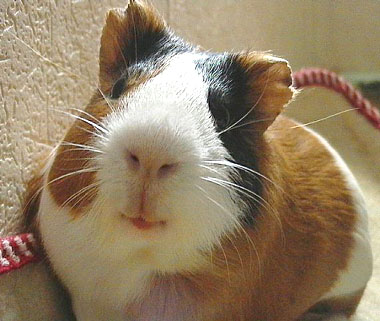 Как правильно ухаживать за домашними животными в зимний период?