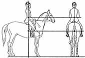 Посадка на лошади в картинках