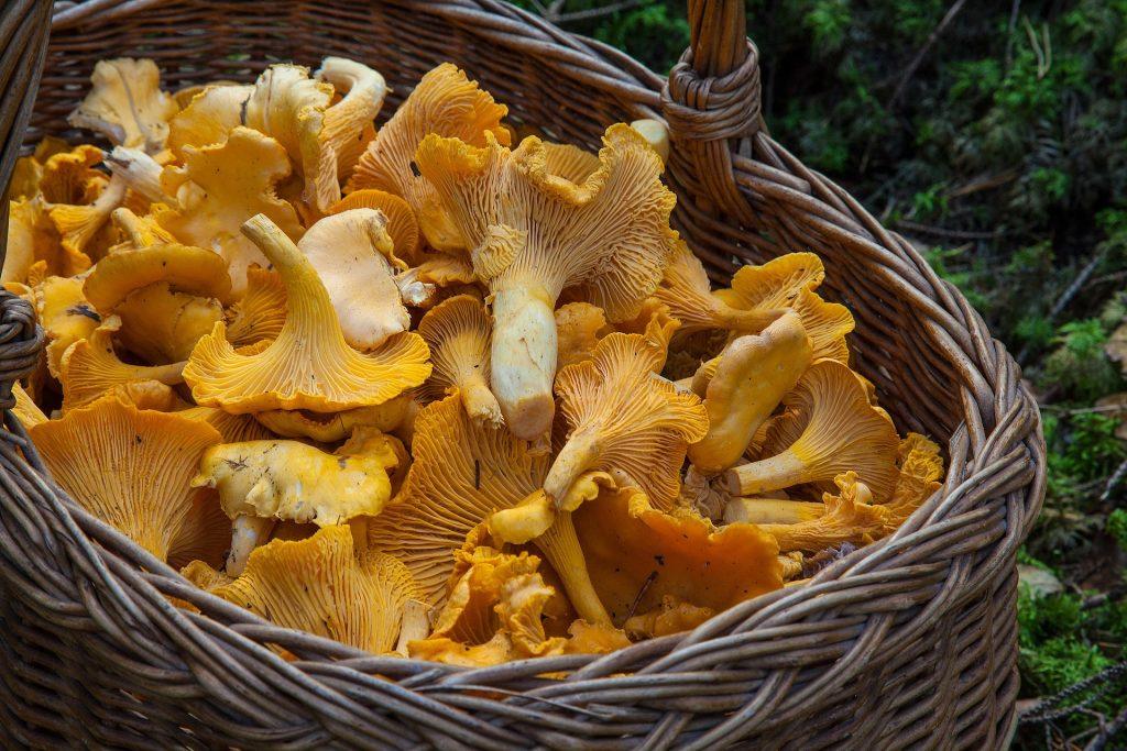 Как выбрать сушилку для грибов
