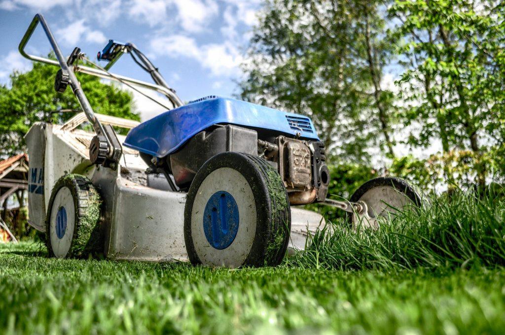 Как обустроить идеальный газон на даче