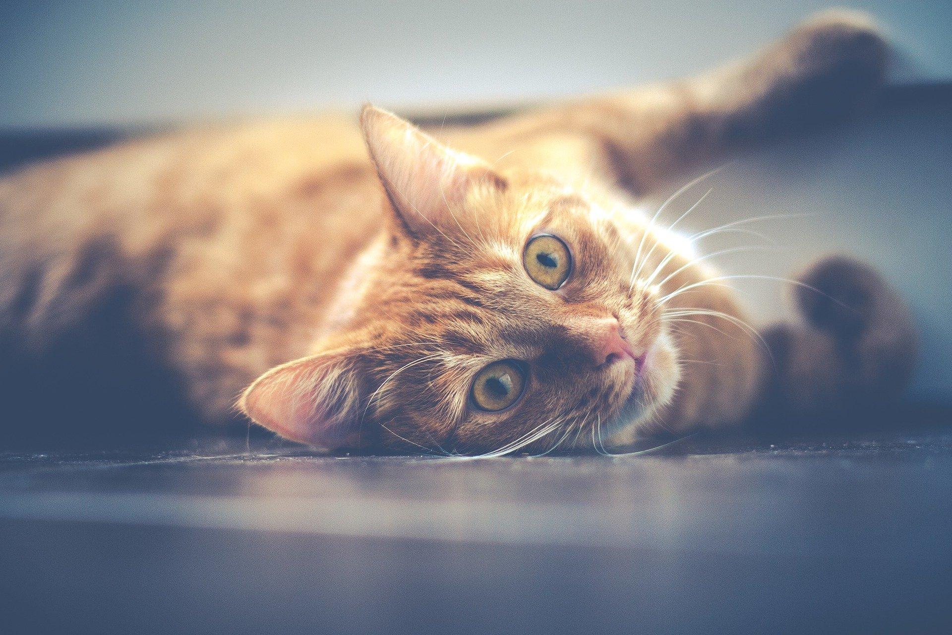 Как понять, что у кошки болит живот
