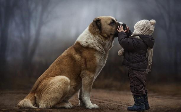Как и почему стоит завести собаку если ребенок просит